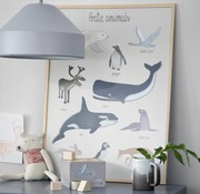 Sebra Poster, Artic animals