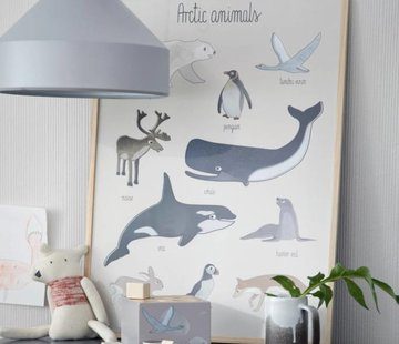 Sebra Poster Artic animals