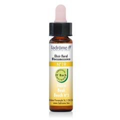 Ladrome Beech / beuk 19 (10 ml)