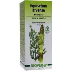 Biover Equisetum arvense tinctuur (50 ml)