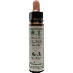 Ainsworths Beech Bach (10 ml)