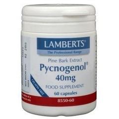 Lamberts Pijnboombast extract (Pycnogenol 40 mg) (60 vcaps)