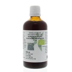 Natura Sanat Glechoma hederacea / hondsdraf tinctuur (100 ml)