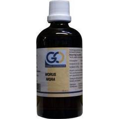 GO Morus nigra (100 ml)