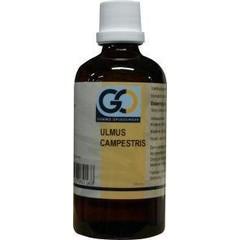 GO Ulmus campestris (100 ml)