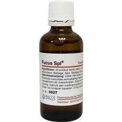 Pascoe Fucus similiaplex (50 ml)