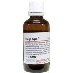 Pascoe Thuja similiaplex (50 ml)