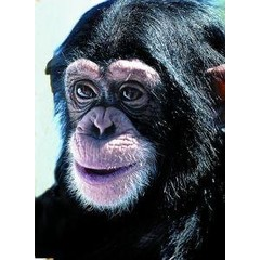 Animal Essences Chimpanzee (30 ml)