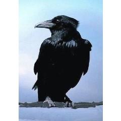 Animal Essences Crow (kraai) (30 ml)