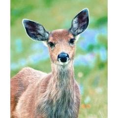 Animal Essences Deer (hert) (30 ml)