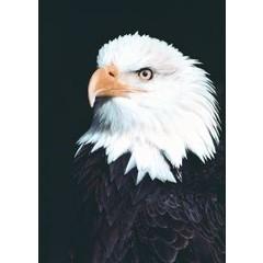 Animal Essences Eagle (adelaar) (30 ml)