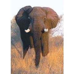Animal Essences Elephant (olifant) (30 ml)