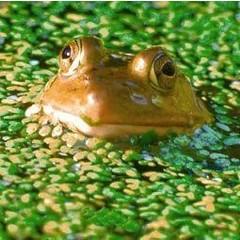 Animal Essences Frog (kikker) (30 ml)