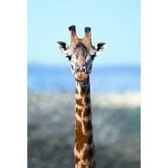 Animal Essences Giraffe (giraf) (30 ml)