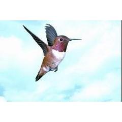 Animal Essences Hummingbird (kolibri) (30 ml)