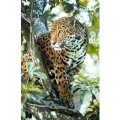 Animal Essences Jaguar (jachtluipaard) (30 ml)