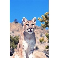 Animal Essences Mountain lion (poema) (30 ml)