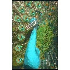 Animal Essences Peacock (pauw) (30 ml)