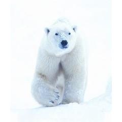Animal Essences Polar bear (ijsbeer) (30 ml)