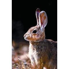 Animal Essences Rabbit (konijn) (30 ml)