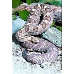Animal Essences Snake (slang) (30 ml)