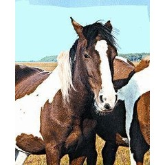 Animal Essences Wild horse (wild paard) (30 ml)