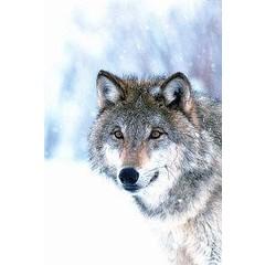Animal Essences Wolf (30 ml)