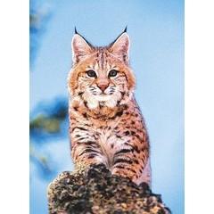 Animal Essences Bobcat (Amerikaanse lynx) (30 ml)