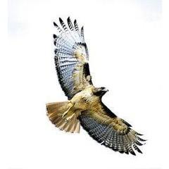 Animal Essences Hawk (havik) (30 ml)