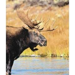 Animal Essences Moose (eland) (30 ml)