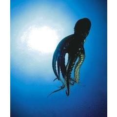 Animal Essences Octopus (30 ml)