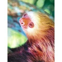Animal Essences Sloth (luiaard) (30 ml)