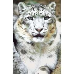 Animal Essences Snow leopard (sneeuwluipaard) (30 ml)