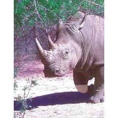 Animal Essences White rhinoceros (witte neushoorn) (30 ml)