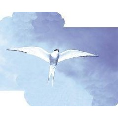 Animal Essences Arctic tern (noordse stern) (30 ml)