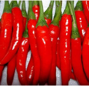 Peperzaad Thai Chile