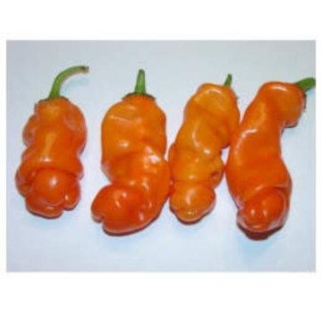 Peperzaad Penis Pepper Orange