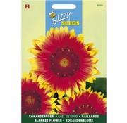 Buzzy Seeds Gaillardia aristata Kokardebloem