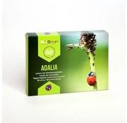 Biogroei larvas Adalia Sistema mariquita contra los áfidos