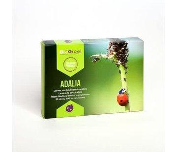 Biogroei Adalia Lieveheersbeest larven tege n bladluis