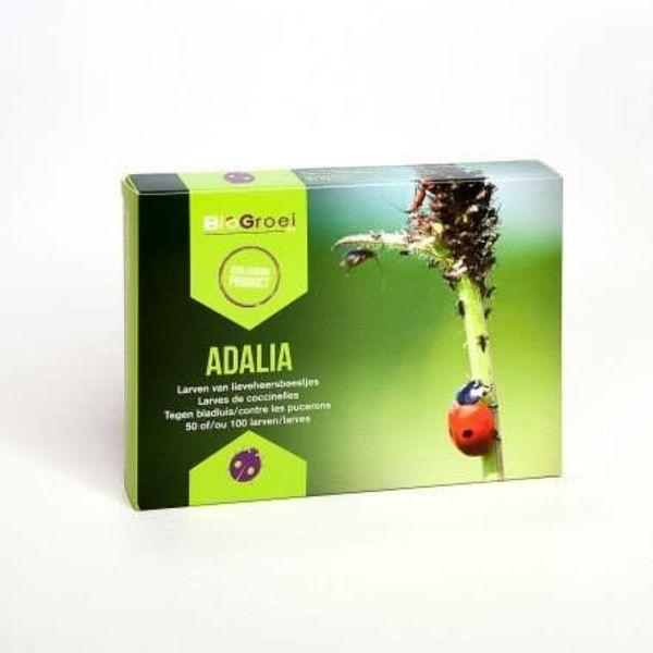 Adalia Lieveheersbeest larven tegen bladluis