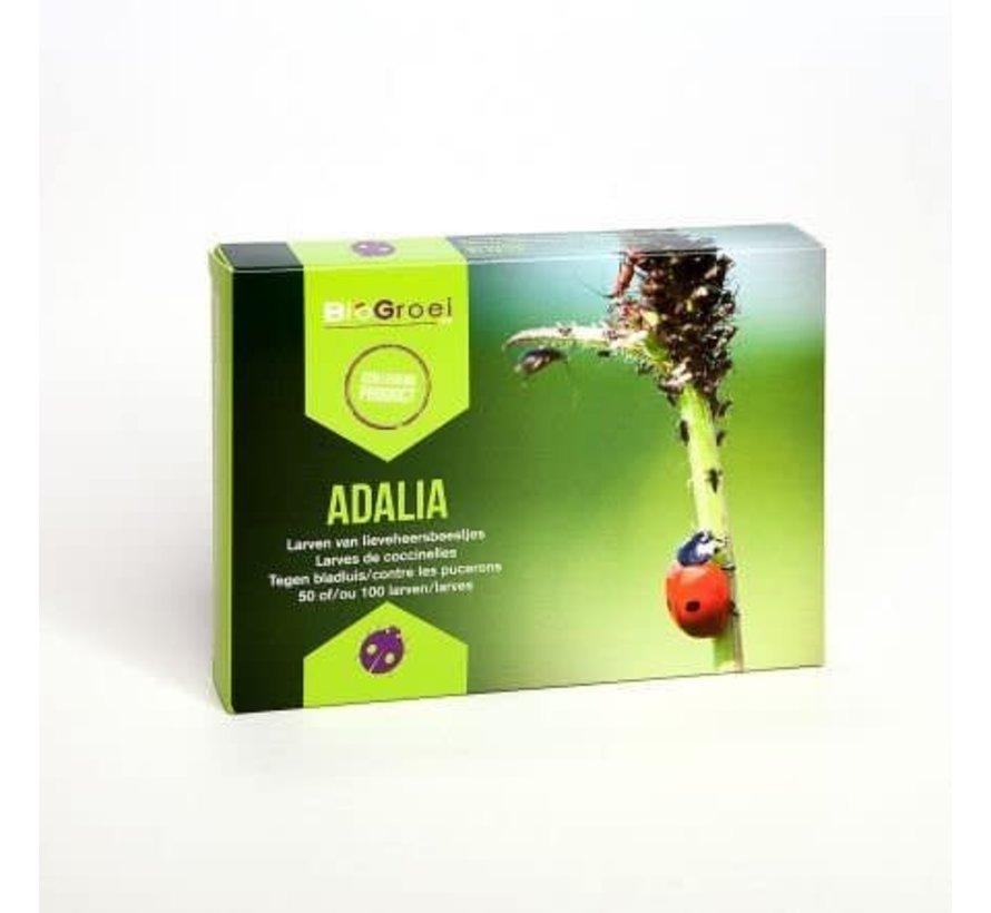 Biogroei Adalia System Ladybug larvae against aphids