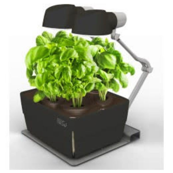 Zengrow 6 Tabletop Garden