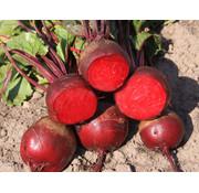Rode bieten zaden - Beta vulgaris var. rubra