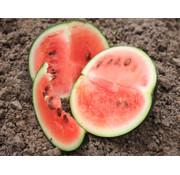 Watermeloen zaden - Citrullus lanatus