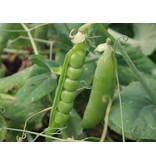 Dopert zaden - Wonder Pisum sativum