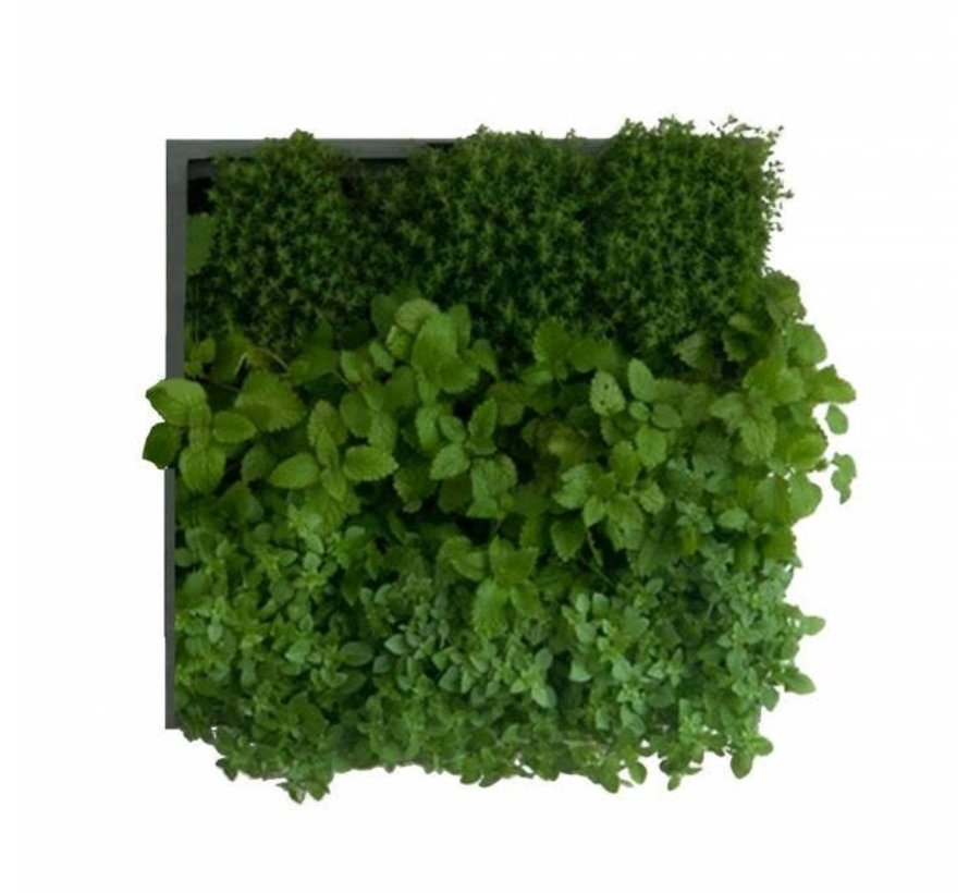 Karoo Green Wall Verticale Plantenbak