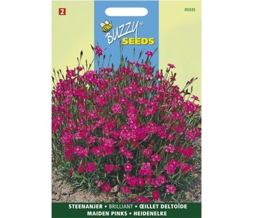 Buzzy Seeds Dianthus delto