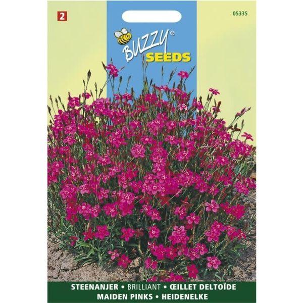 Dianthus delto