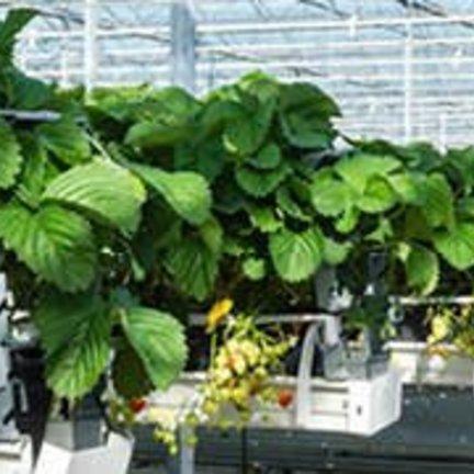 Greenhouses for garden